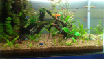 Plantation Aquarium Setup - For Sale