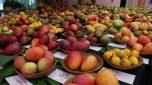 Seven-day mango exhibition begins in Belagavi | Opp EEFA Hotel | Club Road Belgaum