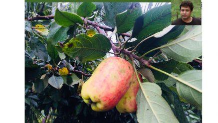 Anees Kinikar of Belgaum succeeded in Growing apples in the climate of Belgaum.
