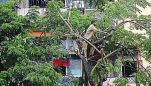 Nearly 500 trees to be pruned, 25 to be felled in Belagavi during this monsoon